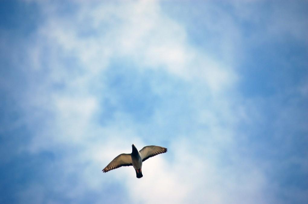 homing-pigeons-3-1397554