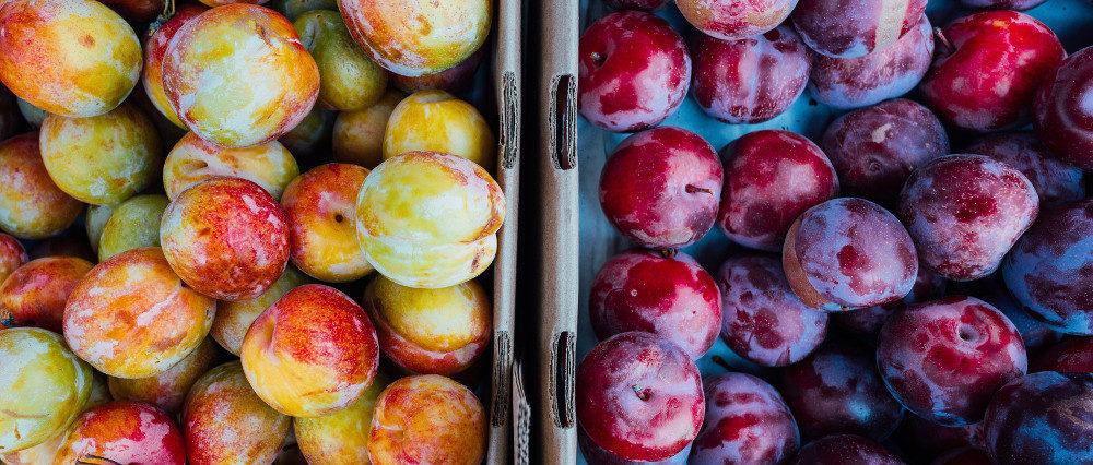 103-po-ich-owocach-poznacie-ich